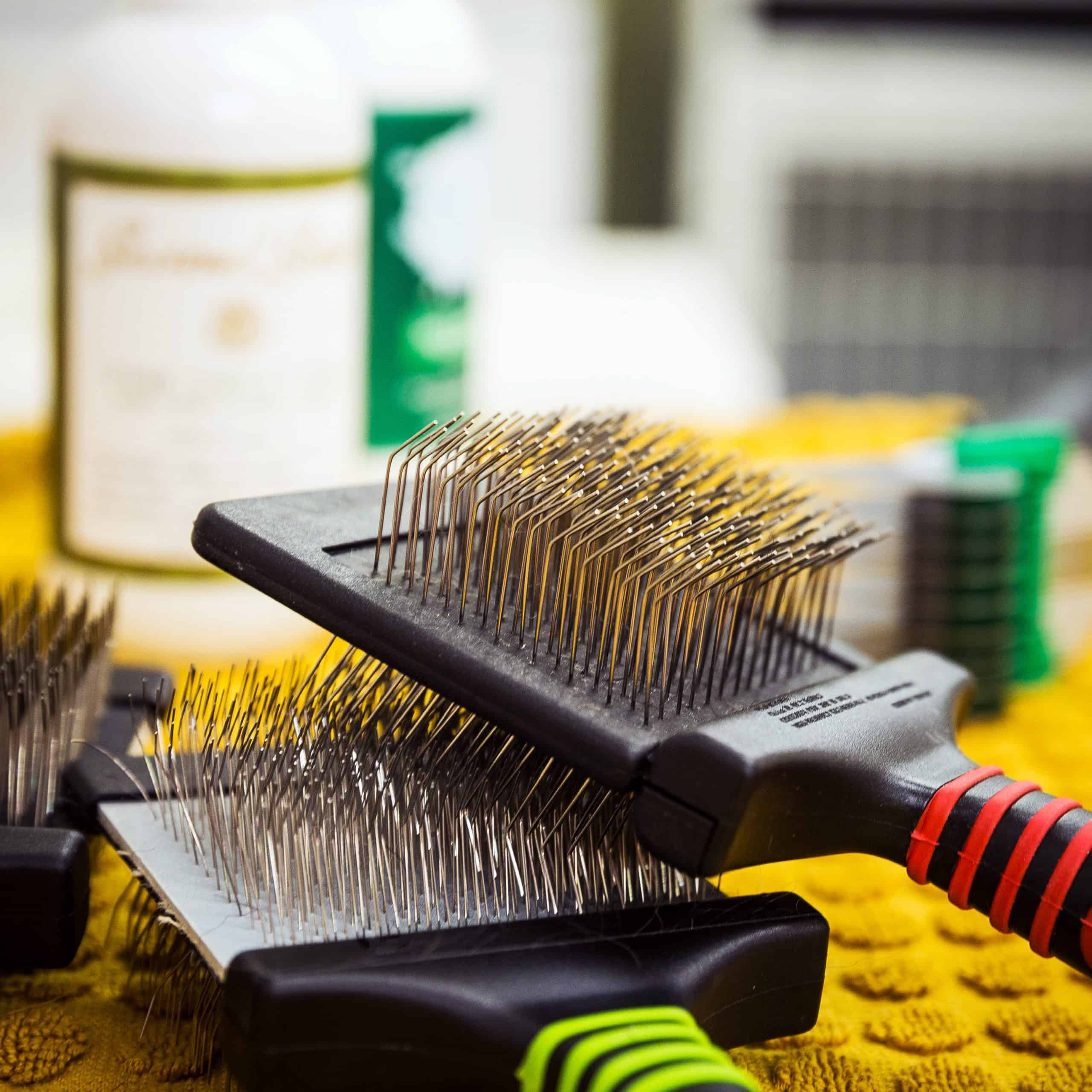 Tools for brushing your dog at home