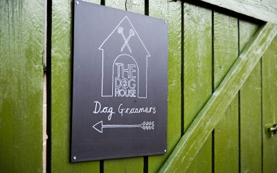 Finding a dog groomer in Leicestershire