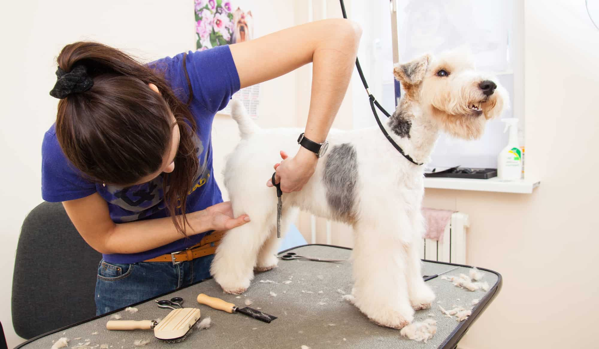 Love your dog groomer day