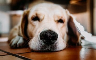 Essential Oils for Pet Anxiety