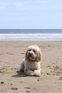 beach 2430741 1920