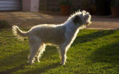 Lockdown Dog Training Tips