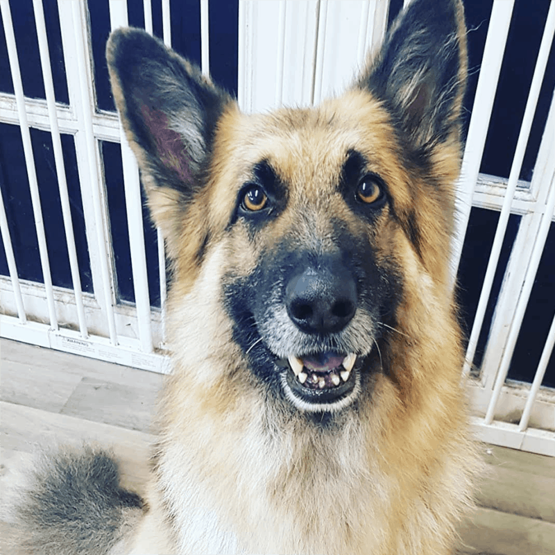 german shepherd luxury dog spa Melton Mowbray Thurmaston