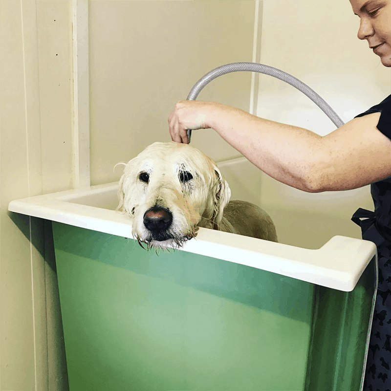 labrador in bath dog grooming Leicester Syston Queniborough