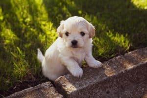 Puppy in garden from breeder