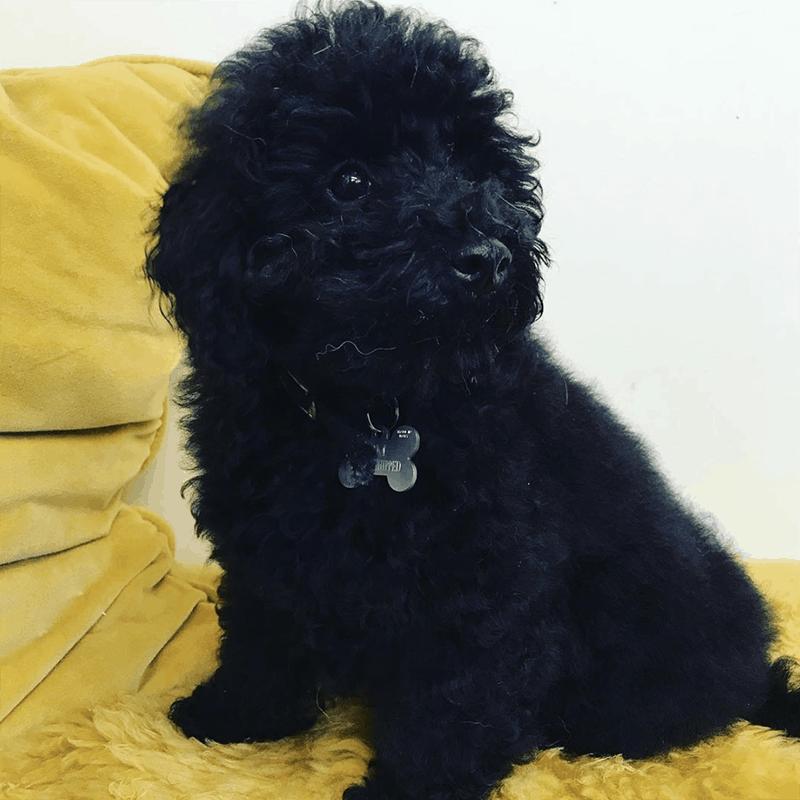 puppy groomer Leicester Syston Queniborough Melton Mowbray Thurmaston Barkby South Croxton