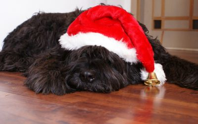 Christmas Gift Ideas for dog lovers